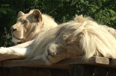 Nouveautés au Zoo d'Amnéville