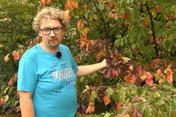 Fabrice Doridant nous propose une visite au Jardin des Faïenciers