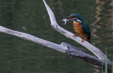 Ligue pour la Protection des Oiseaux à Hoste