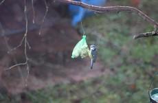 Petite histoire d'oiseaux
