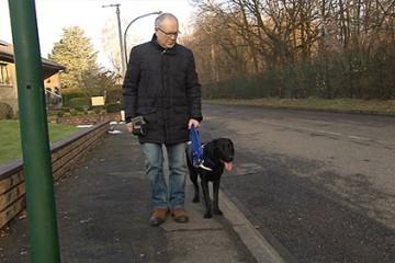 la famille Lang élève des futurs chiens guides d'aveugles