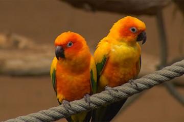 Au jardin zoologique de Sarrebruck, vous pouvez faire des rencontres exceptionnelles