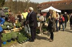 La 6ème édition du marché aux plantes et aux arts du jardin a battu le record de fréquentation