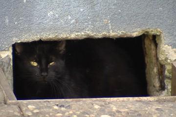 Comme dans d'autres communes, à Sarreguemines, les chats errants prolifèrent
