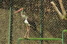 A Neuwiller-Lès-Saverne, les animaux sauvages viennent se refaire une santé avant de retourner dans la nature