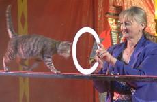 Chez Zavatta, les animaux font leur cirque !