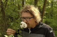 Le Jardin des Faïenciers au printemps