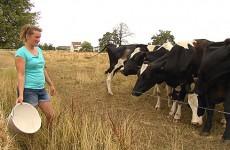 Les agriculteurs sont confrontés à la canicule, au manque d'eau et d'herbe pour les vaches