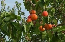 Le verger de Roth a ouvert ses portes et il avait beaucoup de fruits à montrer