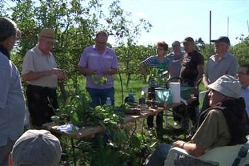 Les arboriculteurs de Grosbliederstroff ont proposé une démonstration de greffe