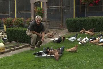 Rencontre avec Rémi Grosz, éleveur de pigeons multirécompensé