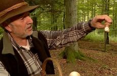 Louis Lampert est un maître en ce qui concerne la cueillette des champignons