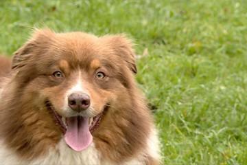 Pour trouver des truffes, les chiens font fonctionner leur odorat