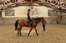 Grâce à un atelier pédagogique, le lycée Henri-Nominé et le centre équestre Sarreguemines Jump rendent l'équitation économiquement accessible à des jeunes