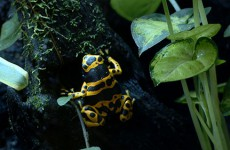 Dans son appartement sarregueminois, Fabrice vit avec des animaux et des plantes de la forêt amazonienne