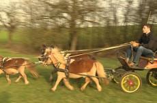 Alexandre Greff est passionné d'attelage de poneys