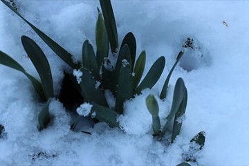 La fleur qui avait oublié l'hiver!