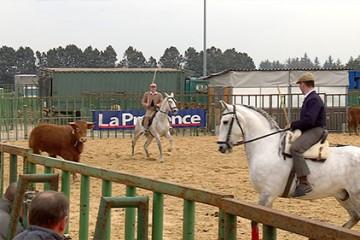 Le tri du bétail est devenu une épreuve sportiv