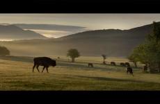 La nature et les animaux font leur cinéma