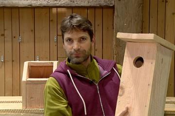Les oiseaux ont des amis parmi les humains qui leur construisent des nichoirs