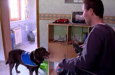 Olivier Holtzer, atteint de myopathie, peut compter au quotidien sur l'aide de sa chienne Guess