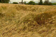 Les agriculteurs ont la tête sous l'eau, la récolte 2016 s'annonce catastrophique
