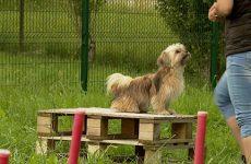 SPA, Agility, parcours, chiens