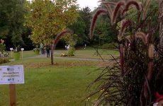 Après s'être illuminé de mille feux, le château Utzschneider à Sarreguemines a accueilli la septième édition de la bourse aux plantes et aux fleurs. Les visiteurs ont pu découvrir le jardin du château, en demandant conseil à des passionnés.