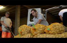 Ils ont la patate à Woelfling - épisode 1: trouver la tubercule