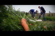 Les joies de l'agriculture - épisode 3: légumes de saison