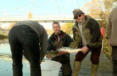 L'association de pêche Aappma a rejeté pas moins de 2.5 tonnes de poissons dans la Sarre et dans le canal des Houillières !