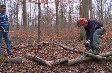 Les particuliers ont du boulot en forêt pour récupérer leurs stères de bois !