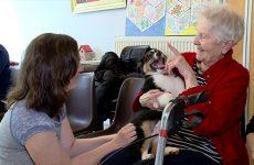 Visite canine à l'EPHAD Sainte-Marie Les chiots apportent du bonheur aux seniors et vice versa.