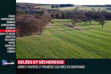 • Zap Me Des infos brèves et efficaces signées TV8, TV Cristal et Mosaïk.