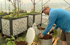 Le service des espaces verts de la ville en profite pour y produire une large palette végétale.