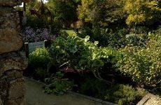 Fabrice Doridant vante la beauté de légumes dans un jardin voire dans un parterre de fleurs.