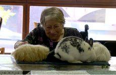 animaux en visite chez les seniors dans le cadre de la semaine bleue