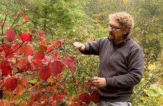 Fabrice Doridant vous présente des plantes parfaites pour l'automne.