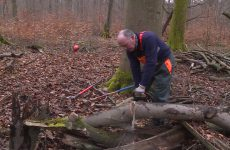 Vente de bois par l'Office National des Forêts