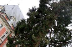 10 ans d'existence pour la Commission des arbres de Sarreguemines
