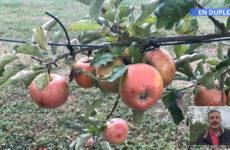 verger : les arbres ploient sous le poids des fruits